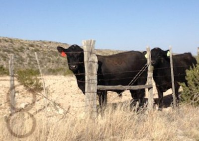 fall 2012 120 mckenzie bulls e